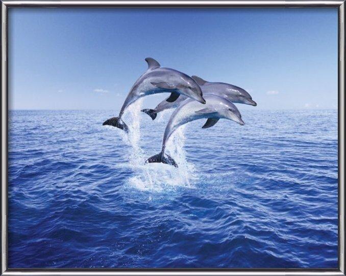 Póster Dolphin trio