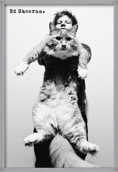 Póster  Ed Sheeran - cat