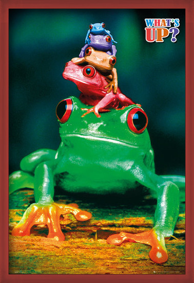 Póster  5 frogs