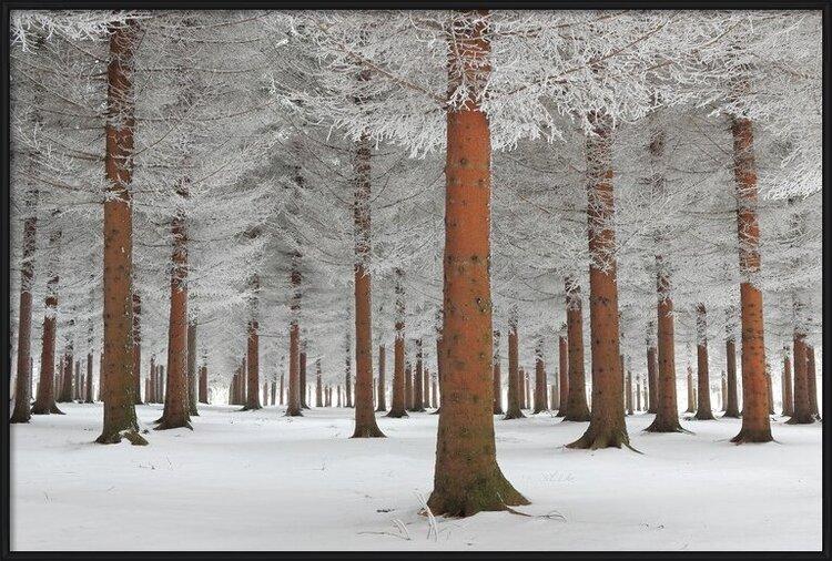 Arte fotográfico magical forest