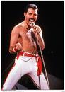 Queen (Freddie Mercury) - Los Angeles 1982